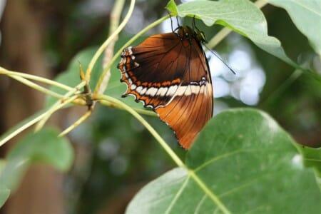 Das Schmetterlingshaus im Botanischen Garten in Leipzig