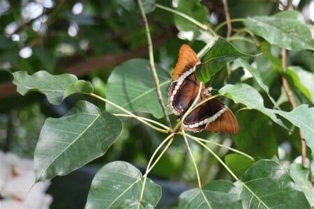 Schmetterlinge im Botanischen Garten