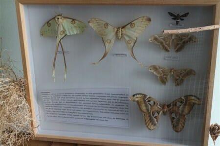 Schmetterlinge im Schaukasten im Botanischen Garten