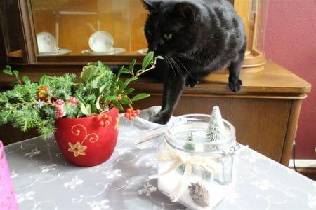 Ein weihnachtliches Outtake mit Kater zum Abschluß