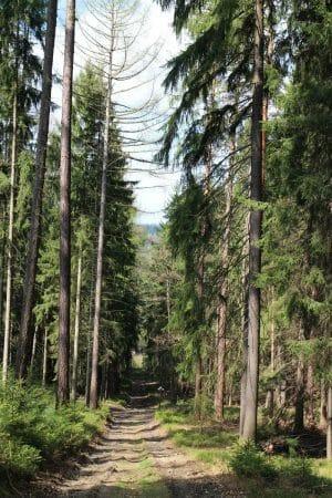 Spaziergang rund um Bad Elster